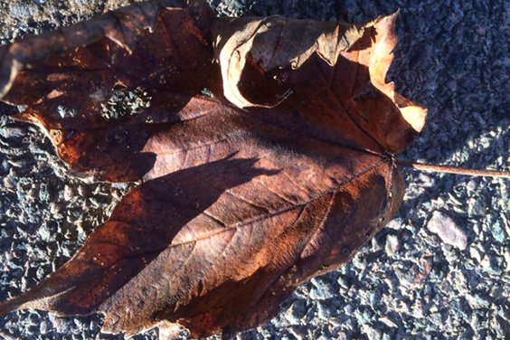 Photo of an autumn leaf