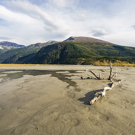 Photo of driftwood on a dry river bed